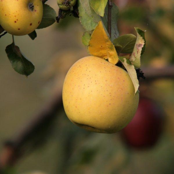 I nostri frutteti